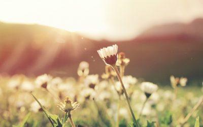 The healing powers of springtime