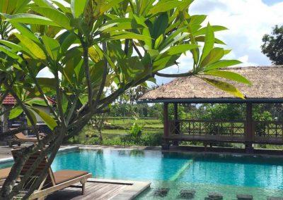 Yin Yoga Teacher Training Yoga Alliance - Bali